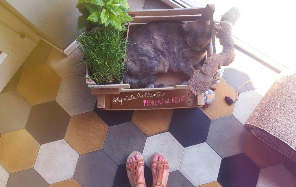 Romeow cat bistrot, ristorante vegano a Roma